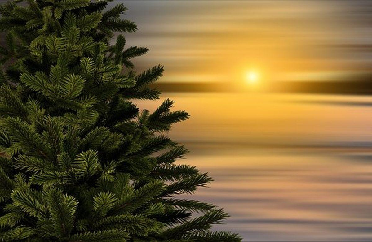 Das Tannenbaum.Con Nect De Calenberger Online News Jetzt Wird Das Tannenbaum